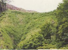 清水沢治山工事 岩盤の緑化