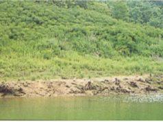 黒田揚水ダム堪水面緑化工事 ダム灌水面の緑化